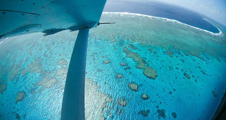 a study of the great barrier reef Global warming's rapid desiccation of the great barrier reef has taken an even more substantial — and permanent— toll than previously understood, a.