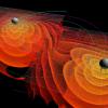 Black Hole Collision Simulation